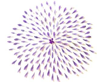 Purple flower - Jacaranda wall print