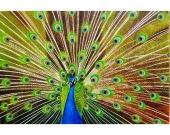 Pavo Real Oil on Canvas