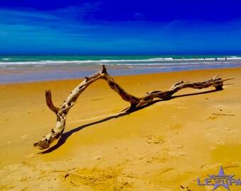 Australian landscape photography, Digital download, Australian beach, driftwood at the beach,