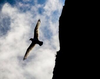 Seagull, Bird, Wildlife, Animals, Røst, Norway, Travel, Photography, Photo, Fine Art, Print, Photograph, Arctic Circle,