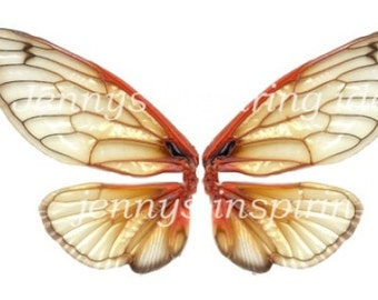 Amber Cicada Wings
