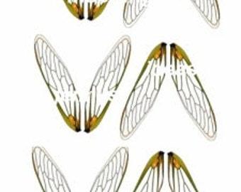 Locust wing