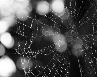 Black and White Spiderweb - Colorado Photography