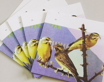 Finches- blank greeting card