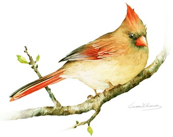 Cardinal Painting - Watercolor Cardinal - 5 by 7 print - Watercolor Painting, Archival Print, Home Decor, Nature Art