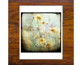 "8x8 Print [JCP-032] - Daisy 01 - 8"" x 8"" print"