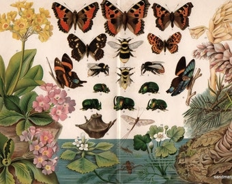 1894 Darwinism Butterfly Beetle Bumblebee Antique Chromolithograph Print