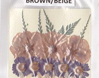ITEM #BB - Real pressed flowers - Designer pack in Brown and Beige, dried flowers, pressed flowers, beige flowers, brown flowers