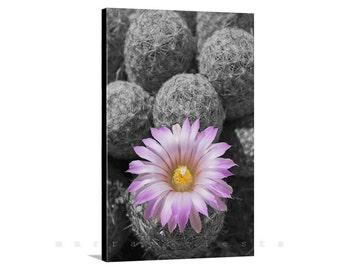 Cactus Flower, Canvas Wall Art, Desert Photographs, Canvas Print, Pink Flower, Magenta, Wall Print, Floral Art, Wall Art, Ready to Hang