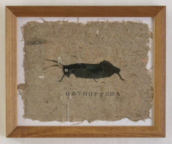 "Canemah Studios ""Orthoptera"" - Framed Mixed media Grasshopper Stencil Print on Handmade New Zealand Flax paper"