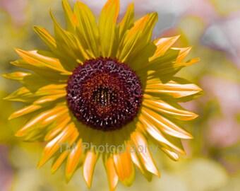 Sunflower - Sunny - Yellow Flower - Flower - Sunshine - Happy - Nature - Bright Flower - Fine Art Photography