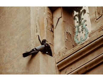 City Birds, 8x12 Print, Architecture Photography, Baltimore Art, Pigeons, Bird Print, Baltimore Photography, Bird Photography, Urban Art