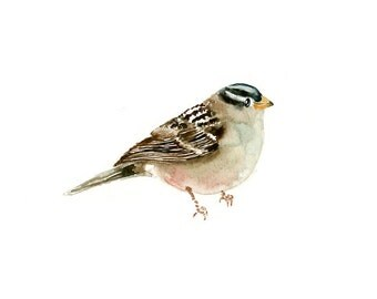 WHITE CROWNED SPARROW Original watercolor painting 10x8inch