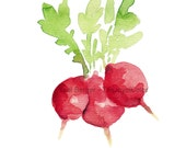 art print Small Radishes, small radish watercolor, red and green, farmer market, kitchen art, still life, vegetable art, limited edition