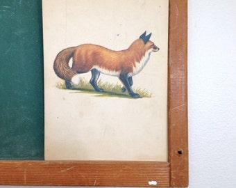 Vintage School Flashcard- Fox