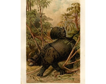 1894 RHINOCEROS PRINT original antique asian animal lithograph