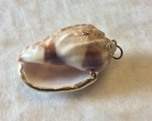 Seashell conch shell gold trim pendant