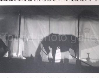 Digital Download, Horse Circus Silhouette, Vintage Photo, Black & White Photo, Printable, Snapshot, Old Photo, Found Photo  AUGUSTINE0919