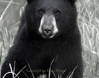 NOTE CARD, Black Bear,  Black Bears, Blank Note Card, Black, Bear Decor, Cabin Decor, Lodge Decor, Rustic Decor,