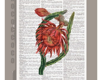 Beautiful Red Cactus Flower Illustration Print on Vintage Dictionary Book page -  Kitchen decor, Botanical art, Artwork