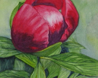 Flower Painting Original Watercolor Art, Red Peony Flower Art, Home Decor Wall Art, Floral Gift of Original Art by Barbara Rosenzweig