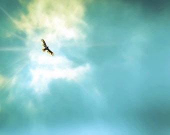 Nature Photography,Inspirational Photography,Sapphire Blue Sky,Gift idea,home decor,red tailed hawk,bird soaring in the sky,turquoise,teal