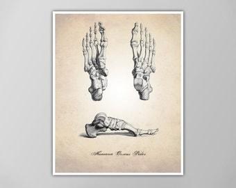 Human Anatomy Foot Art Print, Human Anatomy Feet Drawing, Human Anatomy Poster, Human Feet Illustration, Foot Poster, Feet Print, Human Foot