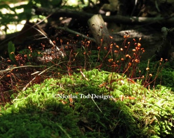 Mossy Forest Photo