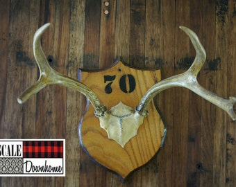 Vintage Antler Mount Plaque 1970 Unique Taxidermy Woodland Glam