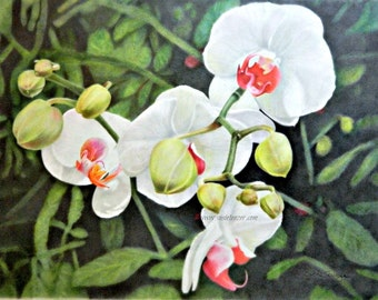 Orchid Flowers White Green Red Original Art Free Shipping