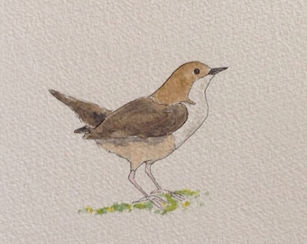 Dipper Coastal Bird Water Colour Painting