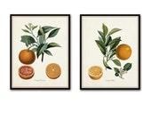 Vintage Citrus Orange Botanical Print Set - Giclee - Canvas Print - Antique Botanical - Print - Poster -Wall Art - Kitchen Art - Fruit Print