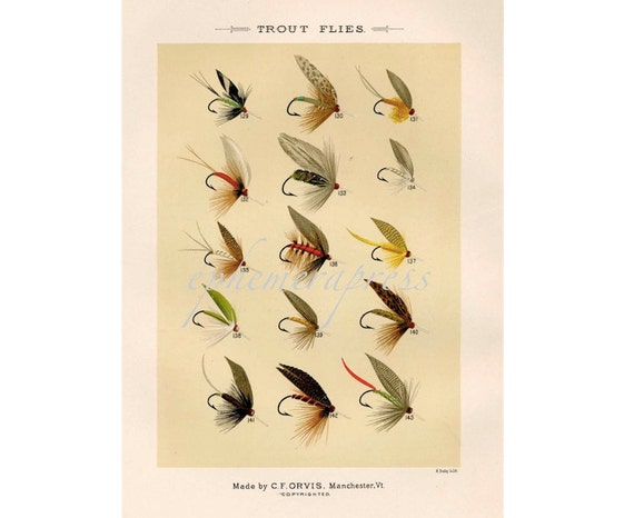TROUT FLIES glorious fly fishing print no. 1