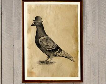 Retro home decor Bird print Pigeon poster AK836