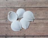 Beach Nautical Decor White Sun Moon Shells - Round White Seashells 10 pcs for Nautical Decor, Beach Weddings or Crafts