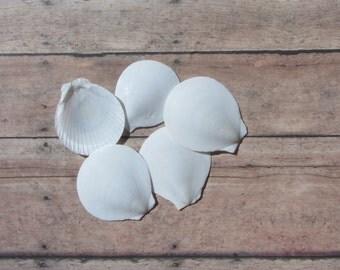 Beach Decor Seashells  White Sun Moon Shells - Round White Sea shells 10 pcs for Nautical Decor, Beach Weddings or Crafts