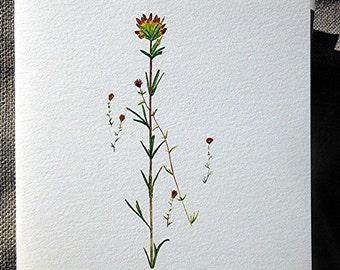 Indian Paintbrush Orange Wildflower on Blank Watercolor Note Card