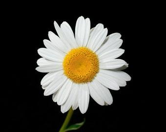 Daisy flower cross stitch pattern chart, yellow and white daisy flower, modern cross stitch, colorful pattern, needlecraft, jpeg pattern