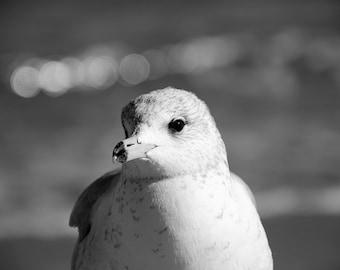 Seagull Picture, Black and White Art, Modern Beach Photography, Bathroom Wall Art, Seashore Photograph, 8x10 Art Print, Coastal Photo