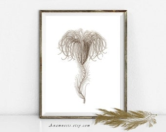 Sea Life Art Print - SEA LILY - Instant Download - printable antique ocean illustration for framing, crafts, totes, fabric, home decor