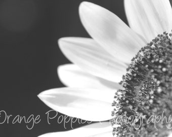 Black and White Sunflower Photograph *choose your size*