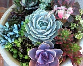 Succulent Plant. - DIY Complete Dish Garden Set. Perfect Centerpiece for any table!
