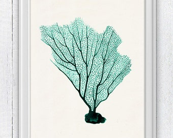 Sea fan sea foam  coral no.06 - ocean life print-Marine  sea life illustration A4 print SPC087