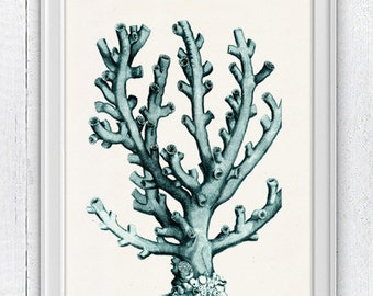 Coral in seafoam n04- sea life print - Antique sealife Illustration -  Marine  sea life illustration A4 print SPC050