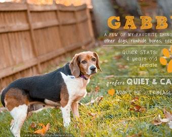 Adoption Profile Overlay - Photoshop Overlay - Shelter Photographer  - Pet Adoption Overlay - Photoshop Template