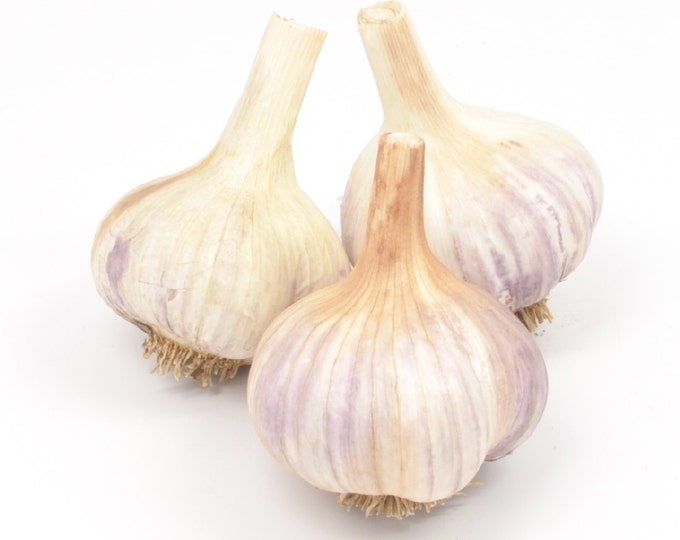 German Red Garlic Bulbs Organic Grown Gourmet - 3 Bulbs Seed Garlic For Planting or Cooking Cold Hardy Variety Fall Shipping