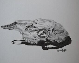 Original Drawing, Deer Skull, Pencil on Paper