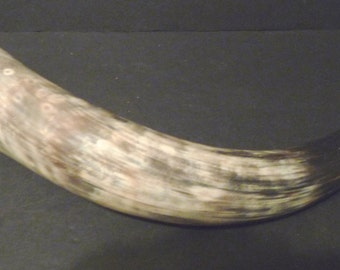 Final Clearance ~ Cow Powder Horn