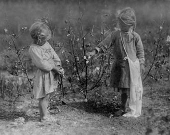 Two Young Girls Picking Cotton Photograph (Art Prints available in multiple sizes)