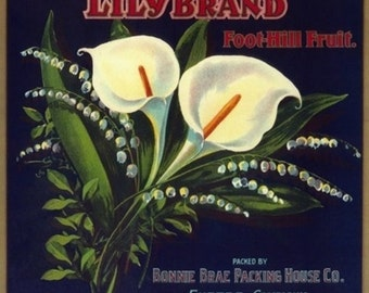 Lily Orange Label (Art Prints available in multiple sizes)